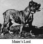 Maiers Lord